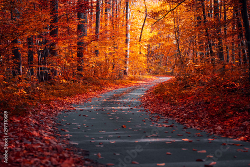 Photo sur Aluminium Marron Asphalt curvy road with fallen leaves in autumn forest. Autumnal background