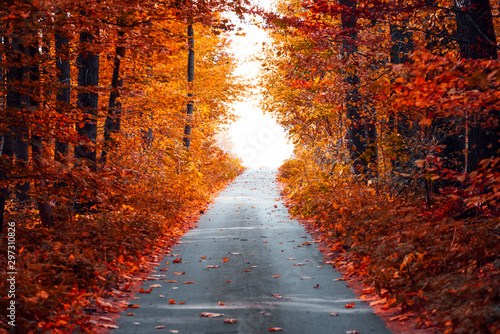 Photo sur Toile Marron Asphalt road with fallen leaves in autumn forest. Zero angle. Autumnal background