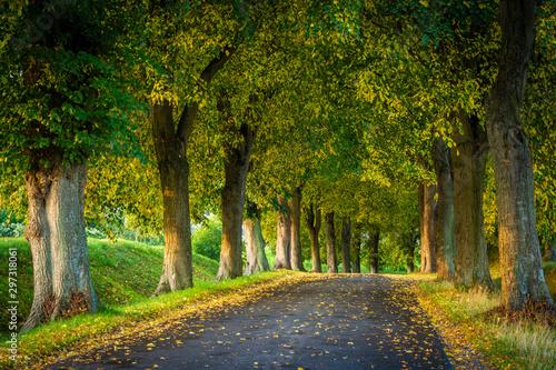 Allee Straße im Herbst - Bäume auf Insel Rügen Wallpaper Mural