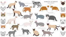 Domestic Cat Breeds And Hybrids Collection Isolated On White. Flat Style Set. Different Color And Country Of Origin