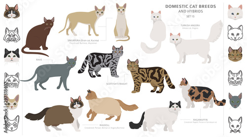 Photo Domestic cat breeds and hybrids collection isolated on white