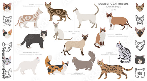 Cuadros en Lienzo Domestic cat breeds and hybrids collection isolated on white