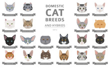 Domestic Cat Breeds And Hybrids Portraits Collection Isolated On White. Flat Color Cat`s Head Style Set