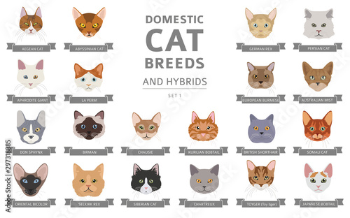 Pinturas sobre lienzo  Domestic cat breeds and hybrids portraits collection isolated on white