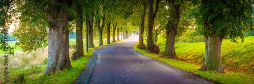 Obraz Allee Straße Panorama im Herbst - Insel Rügen - fototapety do salonu
