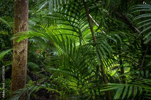 tropikalna-dzungla