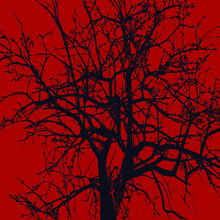 Ebony. The Contour Of A Tree Without Leaves On A Red Background. The Top Of The Tree And Its Upper Branches Without Leaves. Mighty Acacia Without Leaves. A Tree That Is Many Years Old.