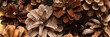 Brown Pine cones as a background, close up. Banner image
