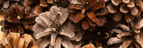 Fotomural  Brown Pine cones as a background, close up. Banner image