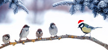 Holiday Card With Bird Sparrow...
