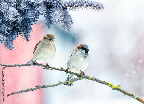 kartka-swiateczna-z-dwoma-wroblami-ptakow