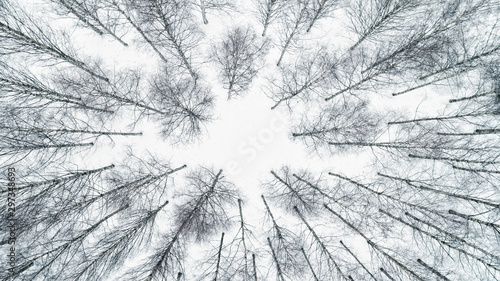 Poster de jardin Blanc Aerial view over leafless tree tops, during winter season. Drone shot.