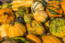 Colorful Ornamental Gourds