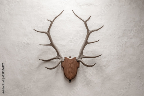Foto op Aluminium Antilope Isolated view of mounted Antlers seen within a light filled room. Fresh plaster, of a rough texture is visible on the lit wall.
