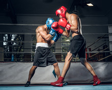 Two Muscular Boxers Have A Competition On The Ring, They Are Wearing Helmets And Gloves.