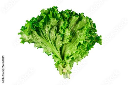 Pinturas sobre lienzo  Fresh lettuce leaves on white background