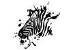 Zebra isolated on white background. Vector grunge illustration design template.