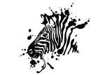 Fototapeta Fototapeta z zebrą - Zebra isolated on white background. Vector grunge illustration design template.