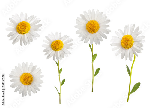 Daisies Wallpaper Mural