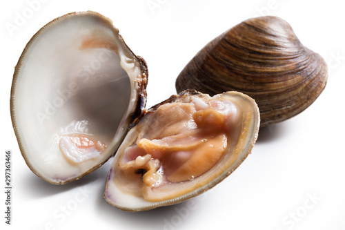 Fotografering clams isolated on white background