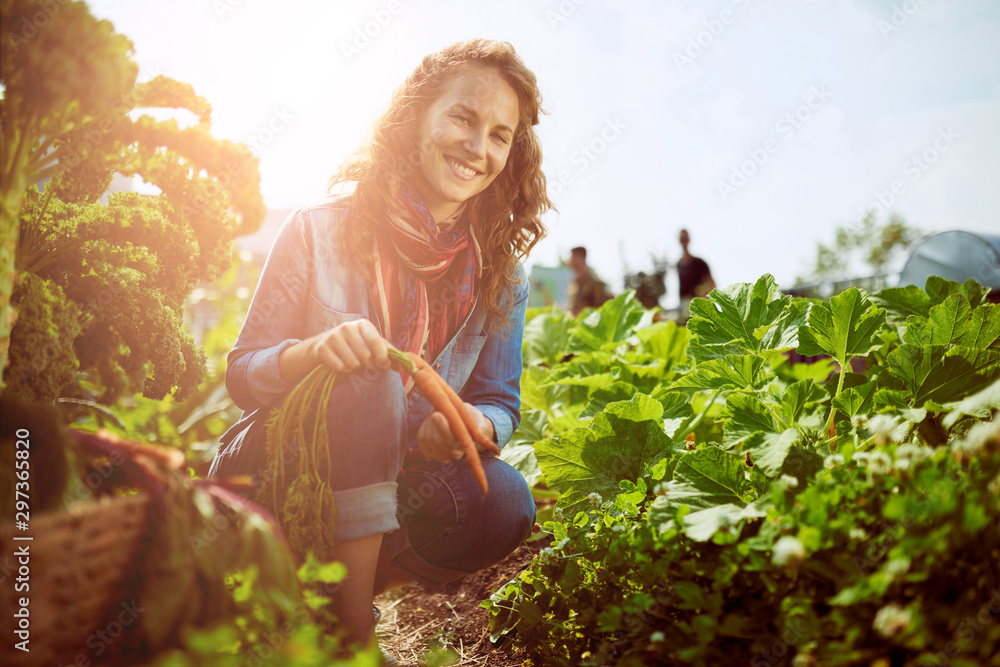 Fototapety, obrazy: Friendly woman harvesting fresh vegetables from the rooftop gree