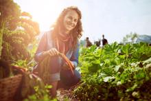 Friendly Woman Harvesting Fres...