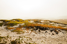 View Of Plants In Sand Dunes Near Beach