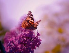 Beautiful Pictures Of Butterflies In Nature. Beautiful Natural Background. Macrophotography.