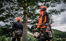 Rear View Of Arborist Men With...