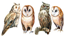 Owl Watercolor Set, Illustration Bird Is Drawn On An Isolated White Background