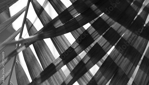 palm-leaf-tropical-plants-nature-background