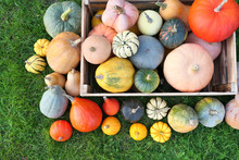 Pumpkins And Squashes Harvest ...