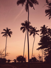 Scenic View Of Tropical Sunset