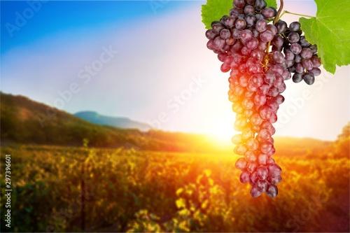 Foto  Wine.