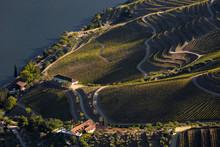 UNESCO World Heritage, The Douro Valley Beautiful Endless Lines Of Vineyards, In Sao Joao Da Pesqueira, Viseu, Portugal.
