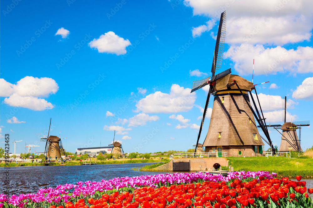Fototapety, obrazy: Colorful spring landscape in Netherlands, Europe. Famous windmills in Kinderdijk village with a tulips flowers flowerbed in Holland. Famous tourist attraction in Holland