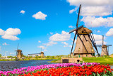 Fototapeta Tulips - Colorful spring landscape in Netherlands, Europe. Famous windmills in Kinderdijk village with a tulips flowers flowerbed in Holland. Famous tourist attraction in Holland