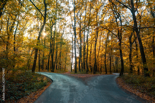 Fototapeta road goes two ways directions in a beautiful autumn forest symbol of making a de