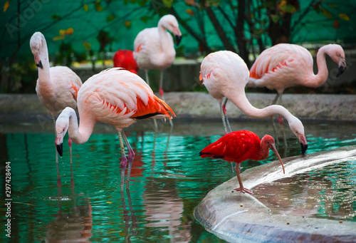 Garden Poster Flamingo Pink flamingo birds in zoo
