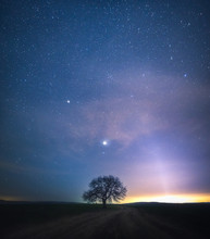 Tree And The Stars