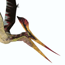 Pteranodon Longiceps Head - Pteranodon Was A Carnivorous Pterosaur Bird Of Prey That Lived In North America During The Cretaceous Period.