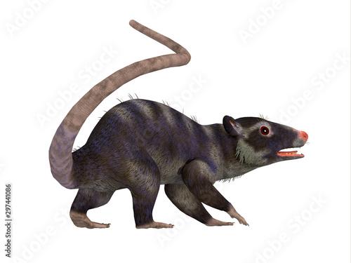 Fototapeta Purgatorius Primate Tail - Purgatorius was a proto-primate that lived in Montana, North America during the Cretaceous Period