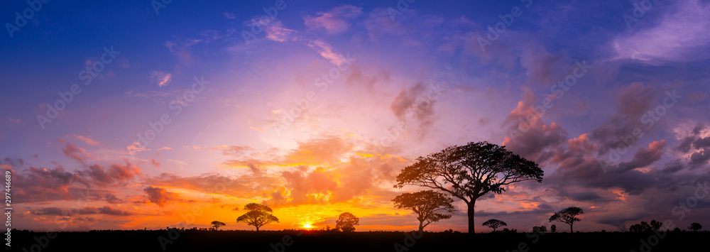 Fototapety, obrazy: Panorama silhouette tree in africa with sunset.Tree silhouetted against a setting sun.Dark tree on open field dramatic sunrise.Typical african sunset with acacia trees in Masai Mara, Kenya