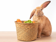 Red-brown Rabbit And The Basket With Lettuce And Carrot On Wooden Table And White Background. Rabbit Like To Eat Vegetables.