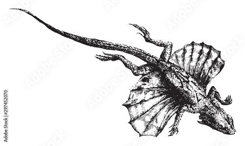 Flying lizard, vintage illustration. Tablou Canvas