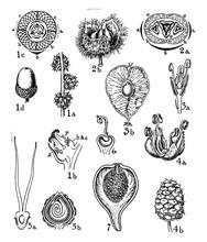 Fagaceae, Ulmaceae, Moraceae, ...