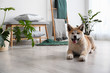 Cute Akita Inu dog in room with houseplants. Space for text