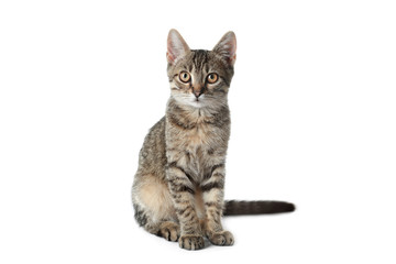 Panel Szklany Kot Grey tabby cat on white background. Adorable pet