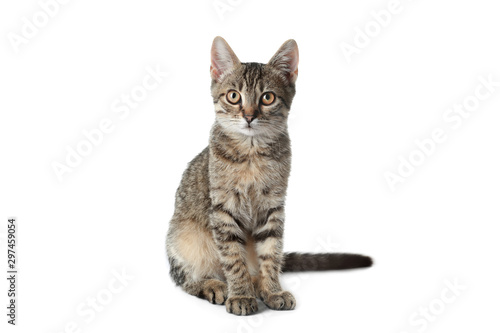 Foto Grey tabby cat on white background. Adorable pet