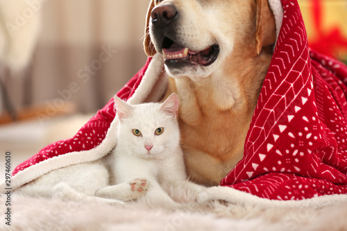 Adorable dog and cat together under blanket at room decorated for Christmas Wallpaper Mural